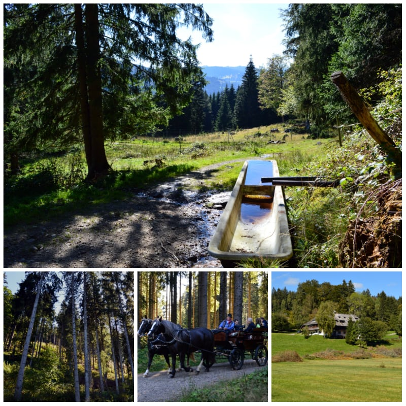 Lake Titisee Black Forest Day Trip, Scenic hike from Lake Titisee to Hinterzarten