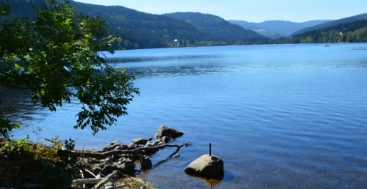 View of scenic Lake Titisee Black Forest